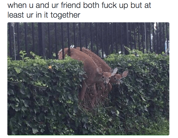 Vegetation - when u and ur friend both fuck up but at least ur in it together