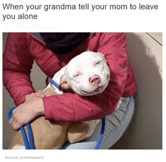Dog breed - When your grandma tell your mom to leave you alone Source: pomeranian2
