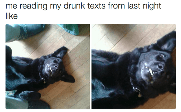 Dog breed - me reading my drunk texts from last night like