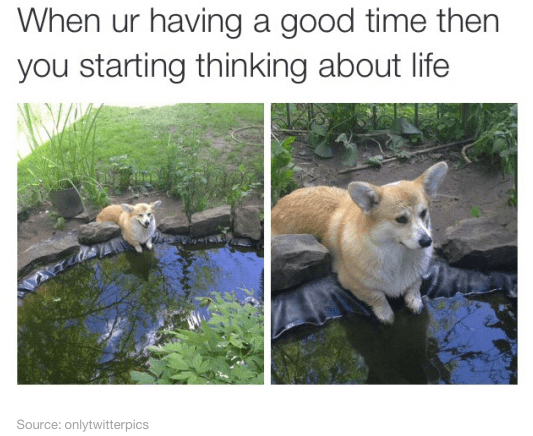 Pembroke welsh corgi - When ur having a good time then you starting thinking about life Source: onlytwitterpics