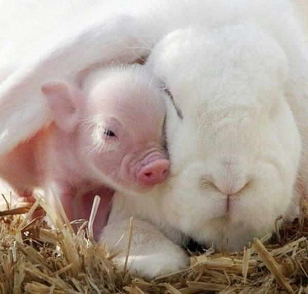 animals cuddling - Mammal