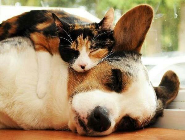 animals cuddling - Cat