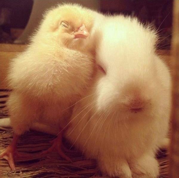 animals cuddling - Skin