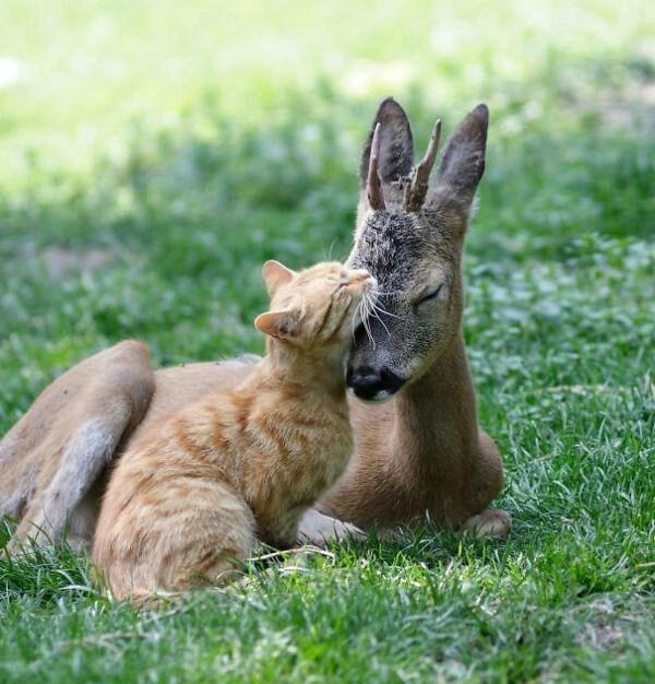 animals cuddling - Vertebrate
