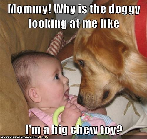 Cheezburger Image 9018388224