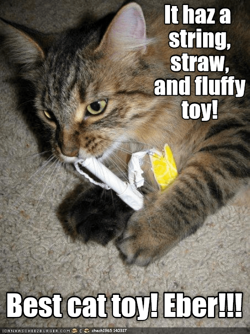 cat best toy Fluffy string caption - 9018457344