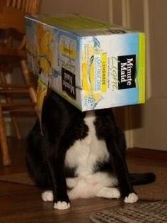 Cat - Minute Maid arght LEMONADE Locurc 12