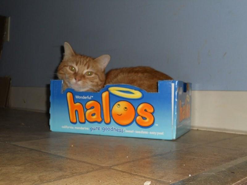 "Cat - halos Wonderful"" california mandarins pure goodness weet-seedless - easy peel"