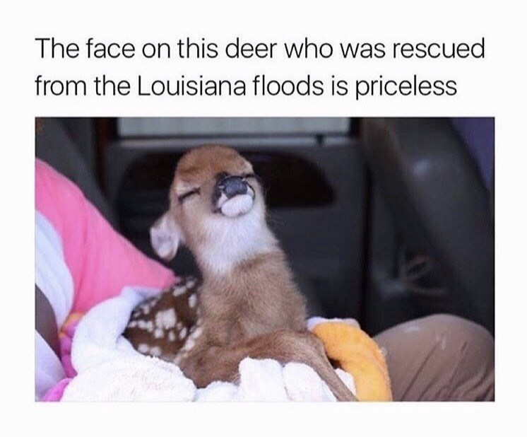 Photo caption - The face on this deer who was rescued from the Louisiana floods is priceless