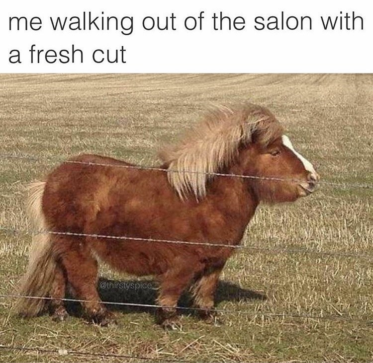 Horse - me walking out of the salon with a fresh cut @thirstyspice