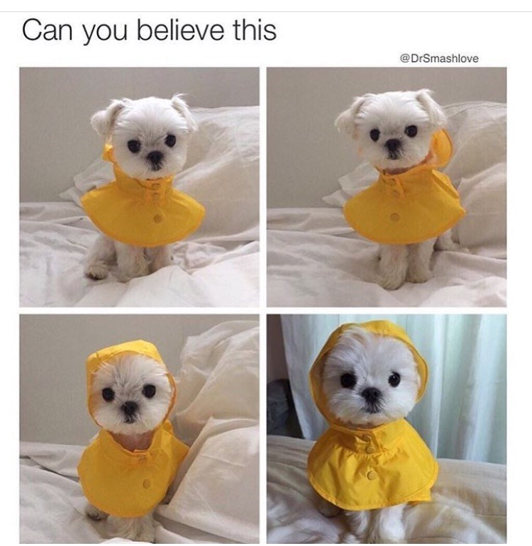Yellow - Can you believe this @DrSmashlove