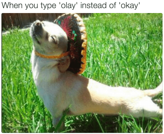 Dog - When you type 'olay' instead of 'okay'