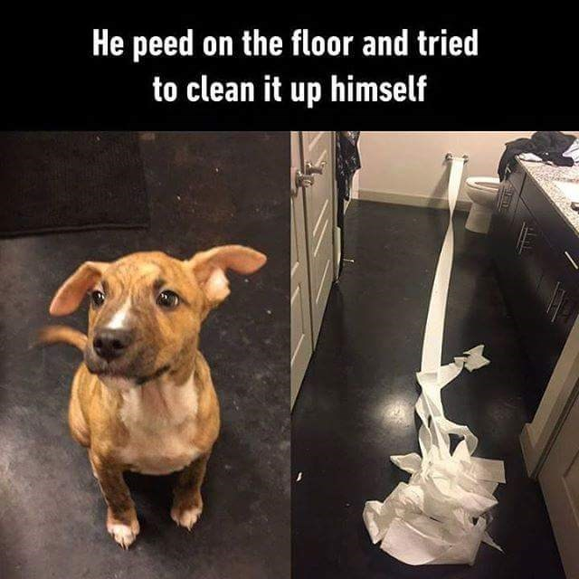 Dog - He peed on the floor and tried to clean it up himself