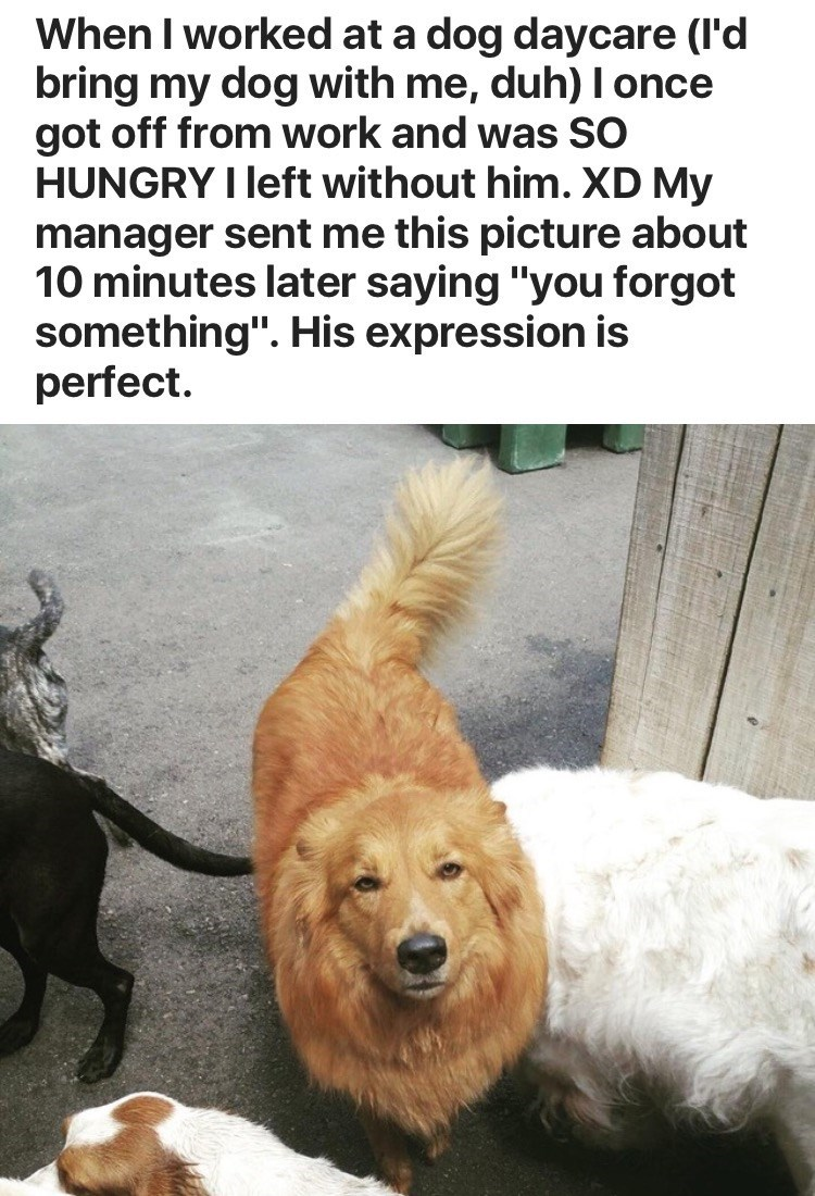 """Dog - When I worked at a dog daycare (l'd bring my dog with me, duh) I once got off from work and was SO HUNGRY I left without him. XD My manager sent me this picture about 10 minutes later saying """"you forgot something"""". His expression is perfect"""