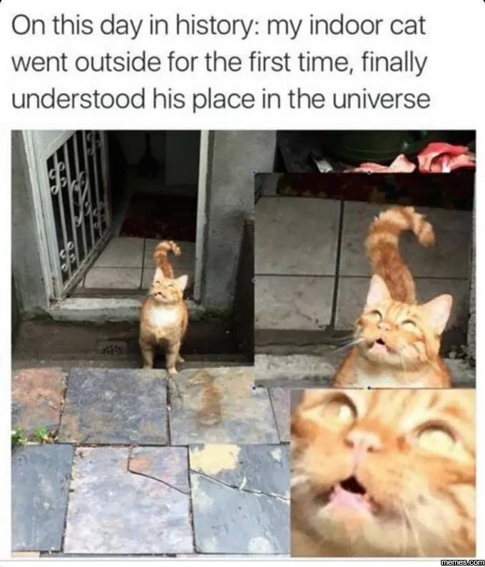 Photo caption - On this day in history: my indoor cat went outside for the first time, finally understood his place in the universe memes.com