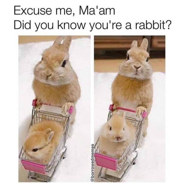 Rabbit - Excuse me, Ma'am Did you know you're a rabbit? @borrowedmemes