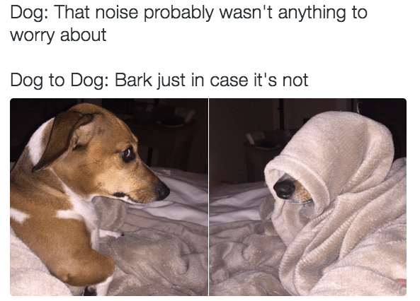 16 doggo memes that are for good boys only i can has cheezburger?