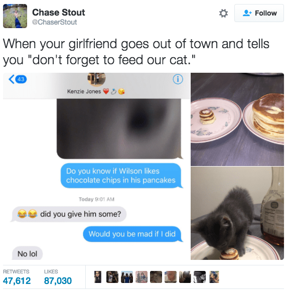 "Screenshot - Chase Stout Follow @ChaserStout When your girlfriend goes out of town and tells you ""don't forget to feed our cat."" 43 Kenzie Jones Do you know if Wilson likes chocolate chips in his pancakes Today 9:01 AM did you give him some? Would you be mad if I did No lol RETWEETS LIKES 47,612 87,030"