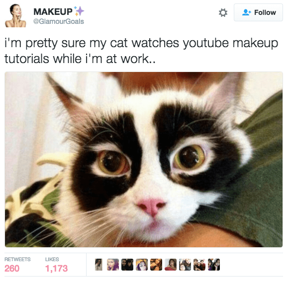 Cat - MAKEUP Follow @GlamourGoals i'm pretty sure my cat watches youtube makeup tutorials while i'm at work.. RETWEETS LIKES 260 1,173