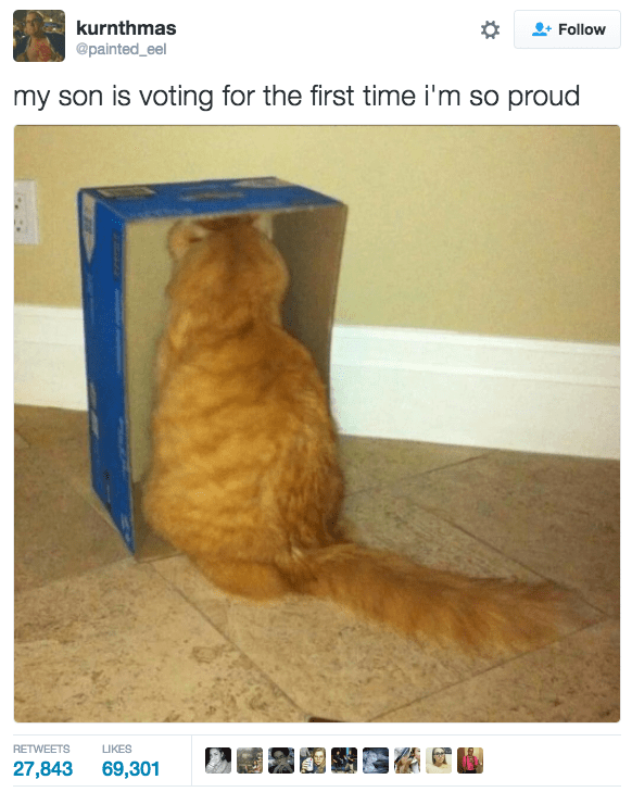 Cat - kurnthmas @painted_eel Follow my son is voting for the first time i'm so proud RETWEETS LIKES 27,843 69,301