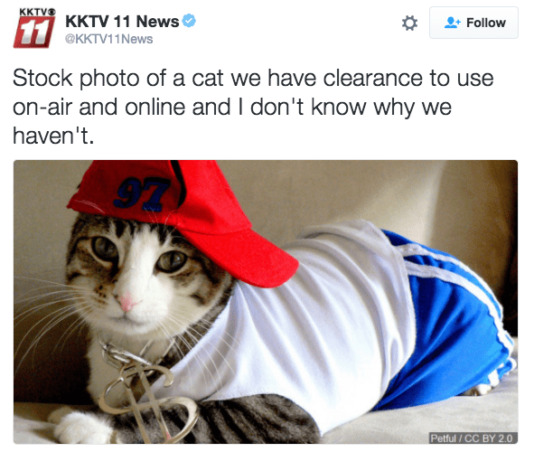 Cat - KKTVS KKTV 11 News Follow 11 @KKTV11News Stock photo of a cat we have clearance to use on-air and online and I don't know why we haven't 97 Petful / CC BY 2.0