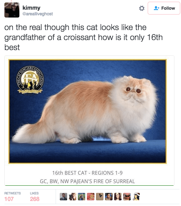 Cat - kimmy @arealliveghost Follow on the real though this cat looks like the grandfather of a croissant how is it only 16th best ORTEANCE SINCH 1906 16th BEST CAT REGIONS 1-9 GC, BW, NW PAJEAN'S FIRE OF SURREAL RETWEETS LIKES 107 268 OCIATION