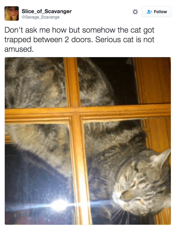 Text - Slice_of_Scavanger @Savage_Scavange Follow Don't ask me how but somehow the cat got trapped between 2 doors. Serious cat is not amused.