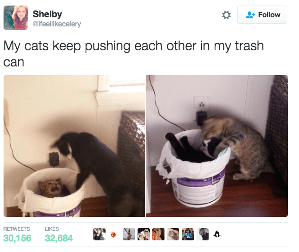 Cat - Shelby @ifeellikecelery Follow My cats keep pushing each other in my trash can RETWEETS LIKES 30,156 32,684