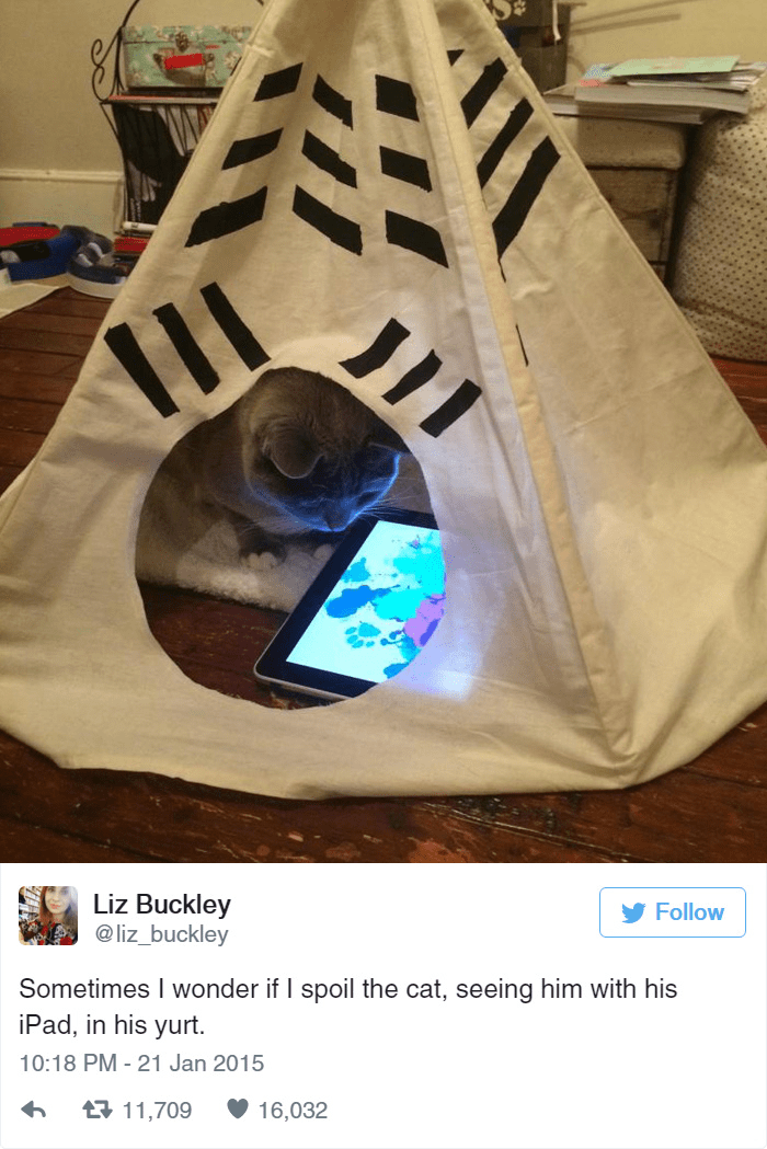 Liz Buckley @liz_buckley Follow Sometimes I wonder if I spoil the cat, seeing him with his iPad, in his yurt. 10:18 PM - 21 Jan 2015 t11,709 16,032