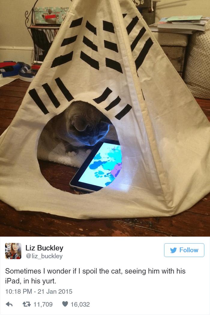 Liz Buckley @liz_buckley Follow Sometimes I wonder if I spoil the cat, seeing him with his iPad, in his yurt. 10:18 PM - 21 Jan 2015 t11,709 16,032