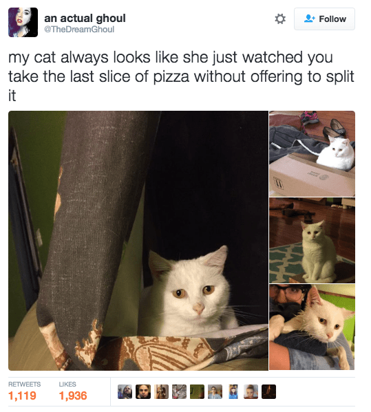 Cat - an actual ghoul @TheDreamGhoul +Follow my cat always looks like she just watched you take the last slice of pizza without offering to split it RETWEETS IKES 1,119 1,936
