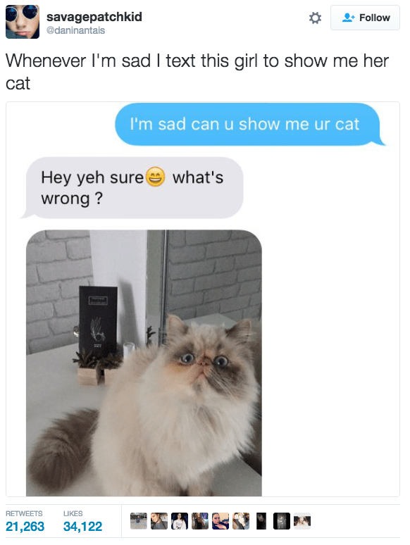 Cat - savagepatchkid Follow @daninantais Whenever I'm sad I text this girl to show me her cat I'm sad can u show me ur cat Hey yeh sure wrong? what's RETWEETS LIKES 21,263 34,122