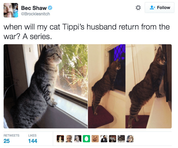 Cat - Bec Shaw Follow @Brocklesnitch when will my cat Tippi's husband return from the war? A series. RETWEETS LIKES 25 144