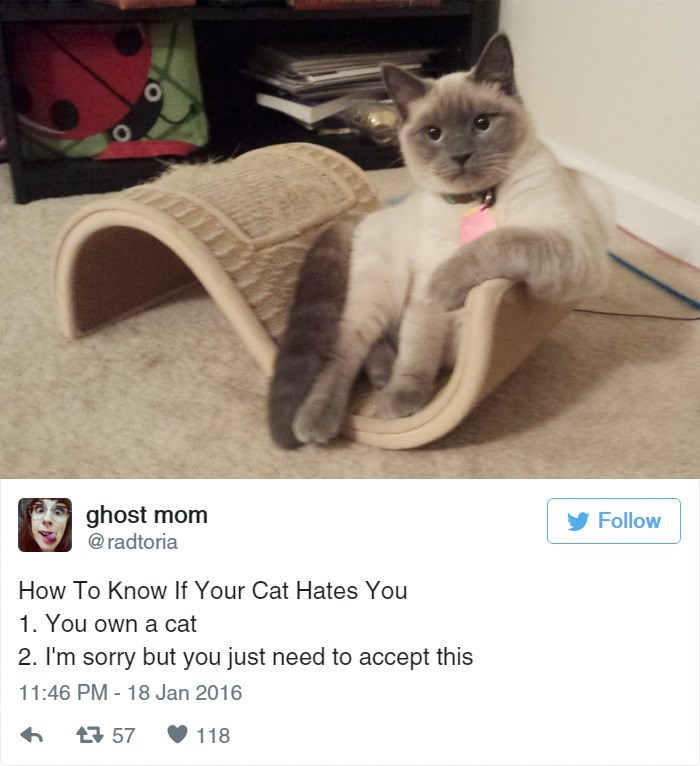 Cat - ghost mom @radtoria Follow How To Know If Your Cat Hates You 1. You own a cat 2. I'm sorry but you just need to accept this 11:46 PM -18 Jan 2016 t57 118
