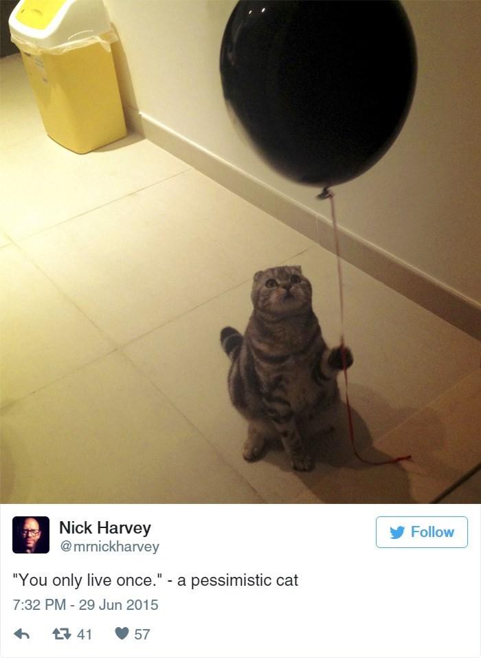 "Tile - Nick Harvey @mrnickharvey Follow ""You only live once."" - a pessimistic cat 7:32 PM - 29 Jun 2015 t41 57"