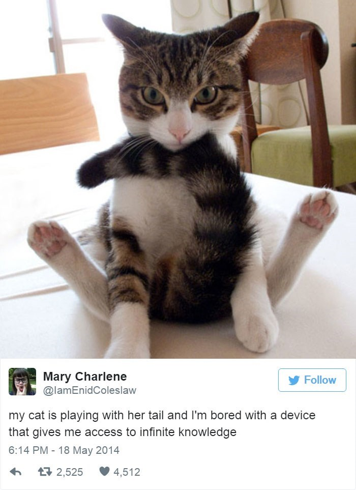 Cat - Mary Charlene @lamEnidColeslaw Follow my cat is playing with her tail and I'm bored with a device that gives me access to infinite knowledge 6:14 PM 18 May 2014 t2,525 4,512