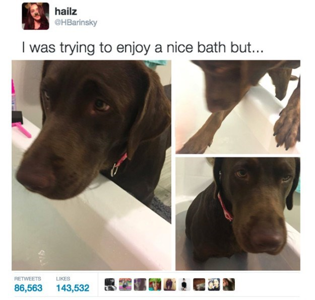 Vertebrate - hailz @HBarinsky I was trying to enjoy a nice bath but... RETWEETS LIKES 143,532 86,563