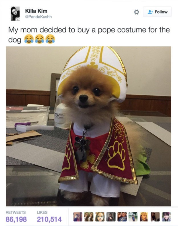 Dog clothes - Killa Kim Follow @PandaKushh My mom decided to buy a pope costume for the dog use LIKES RETWEETS 22 86,198 210,514