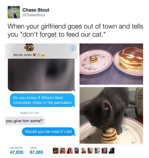 "Text - Chase Stout @ChaserStout When your girlfriend goes out of town and tells you ""don't forget to feed our cat."" Kenzie Jones Do you know if Wilson likes chocolate chips in his pancakes Today 9:01 AM you give him some? Would you be mad if I did RETWEETS LIKES 47,635 87,065"