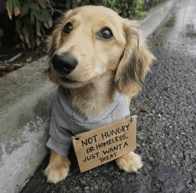 shut up and take my money homeless puppy sign