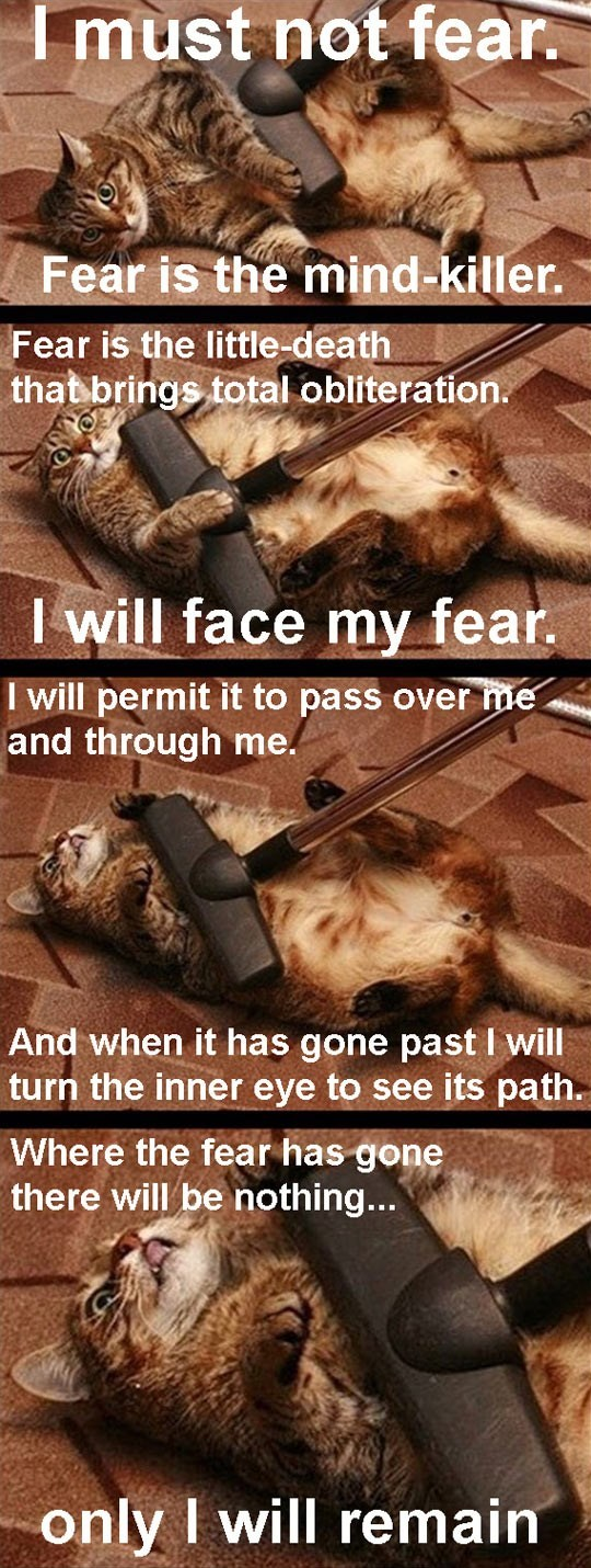 go to your happy place kitty fear