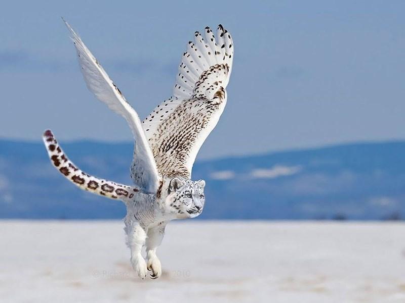 Owl - 2010 ORicar