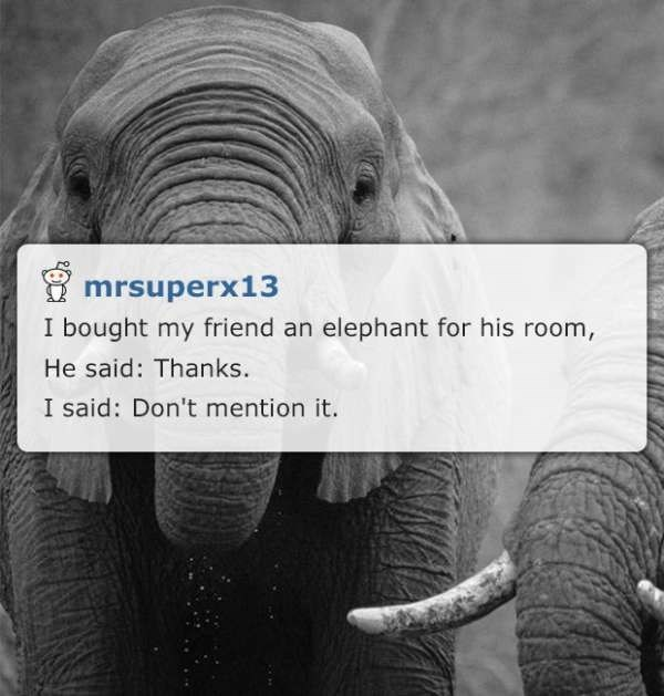elephant in the room corny joke meme