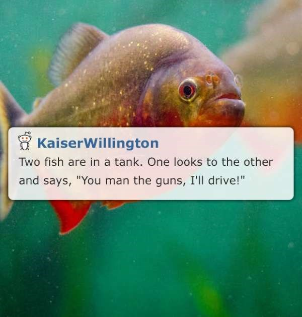 fish tank corny joke meme by reddit user Kaiser Willington