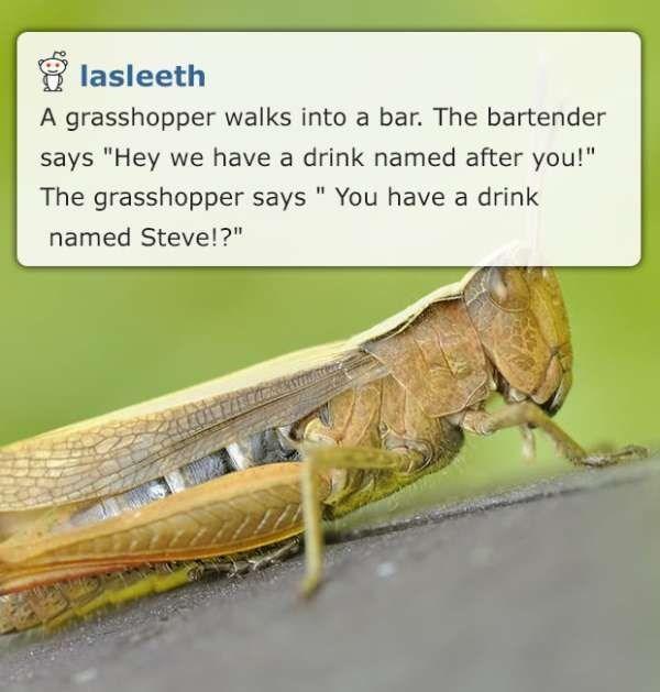 grasshopper corny joke meme from comment by by reddit user lasleeth