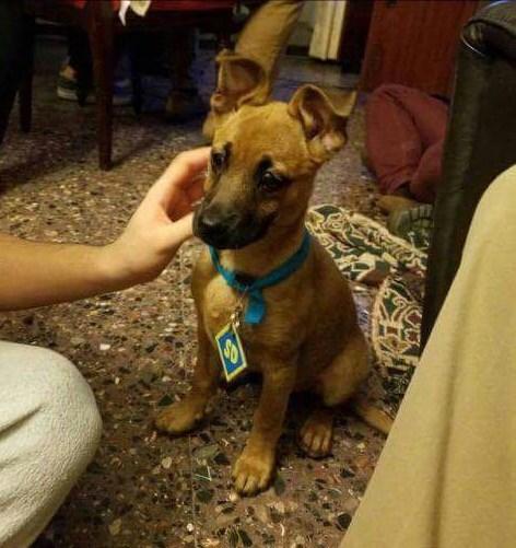 scooby doo puppy - 9019571712