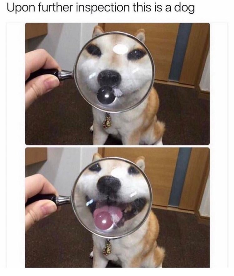 doggo doggeh me_irl - 9019579904