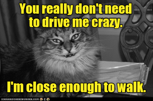 crazy cat drive Close Enough walk dont caption need