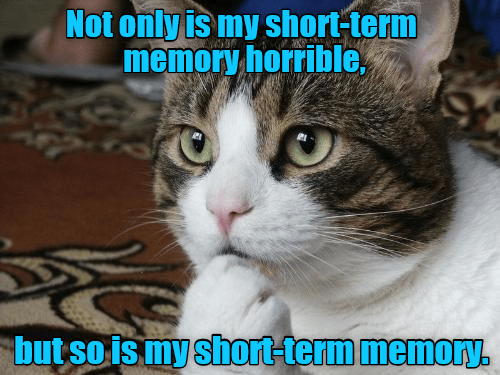 cat,memory,horrible,short term,caption