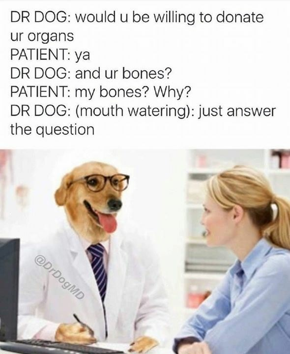 Text - DR DOG: would u be willing to donate ur organs PATIENT: ya DR DOG: and ur bones? PATIENT: my bones? Why? DR DOG: (mouth watering): just answer the question @DrDogMD